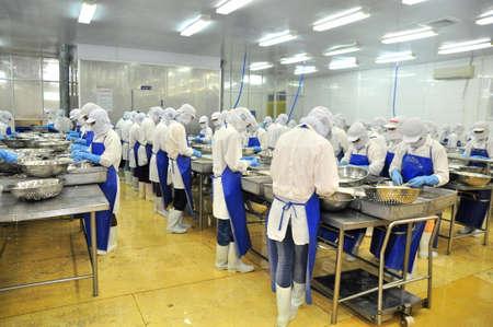 negocios comida: Tra Vinh, Vietnam - 19 de noviembre 2012: Los trabajadores están pelando y procesamiento de camarones crudos frescos en una fábrica de mariscos en el delta del Mekong de Vietnam