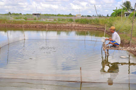 feed the poor: BAC LIEU, VIETNAM - NOVEMBER 22, 2012: A farmer is feeding fish in his small own pond in the mekong delta of Vietnam