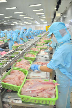 CAN THO, VIETNAM - JULY 1, 2011: Workers are filleting pangasius catfish in a seafood factory in the Mekong delta of Vietnam