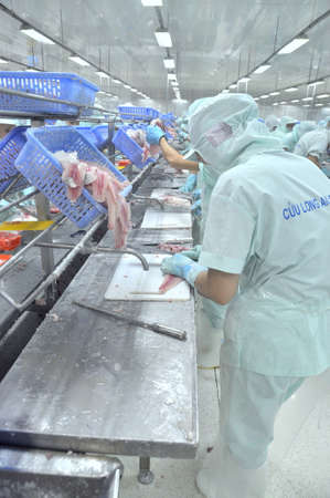 countervailing duty: AN GIANG, VIETNAM - SEPTEMBER 12, 2013: Workers are filleting of pangasius catfish  in a seafood processing plant in An Giang, a province in the Mekong delta of Vietnam Editorial
