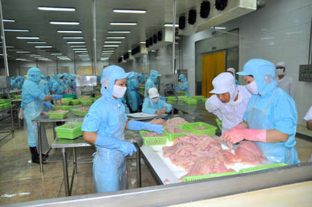 CAN THO, VIETNAM - JULY 1, 2011: Workers are working in the processing line of pangasius catfish in a seafood factory in the Mekong delta of Vietnam