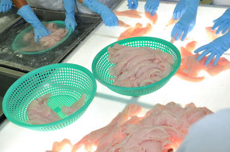 countervailing duty: TIEN GIANG, VIETNAM - MARCH 2, 2013: Workers are testing the color of pangasius fish in a seafood processing plant in Tien Giang, a province in the Mekong delta of Vietnam Editorial