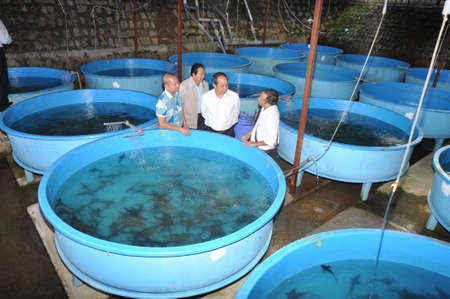 hatchery: LAM DONG, VIETNAM - MAY 5, 2012: A sturgeon hatchery is being introduced to farmers in Tuyen Lam lake, Da Lat city Editorial
