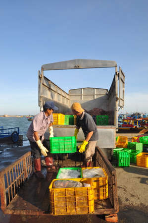 forage fish: LAGI, VIETNAM - FEBRUARY 26, 2012: Workers are loading forage fish onto the truck to the feed mill in Lagi seaport Editorial