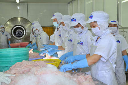 TIEN GIANG, VIETNAM - MARCH 2, 2013: Workers are testing the color of pangasius fish in a seafood processing plant in Tien Giang, a province in the Mekong delta of Vietnam Editorial