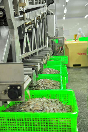 PHAN RANG, VIETNAM - DECEMBER 29, 2014: Shrimps are peeled and sized by machine for exporting in a seafood factory in Vietnam