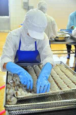 TRA VINH, VIETNAM - NOVEMBER 19, 2012: Workers are rearranging peeled shrimp onto a tray to put into the frozen machine in a seafood factory in the mekong delta of Vietnam Redakční