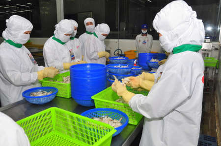 HAU GIANG, VIETNAM - JUNE 23, 2013: Workers are working in a shrimp processing plant in Hau Giang, a province in the Mekong delta of Vietnam