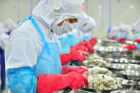 PHAN RANG, VIETNAM - DECEMBER 29, 2014: Workers are peeling and processing fresh raw shrimps in a seafood factory in Vietnam Reklamní fotografie - 41420658