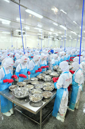 PHAN RANG, VIETNAM - DECEMBER 29, 2014: Workers are peeling and processing fresh raw shrimps in a seafood factory in Vietnam