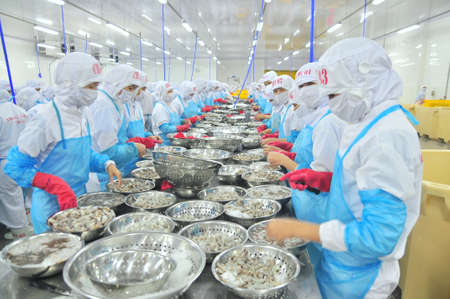 shrimp: PHAN RANG, VIETNAM - DECEMBER 29, 2014: Workers are peeling and processing fresh raw shrimps in a seafood factory in Vietnam