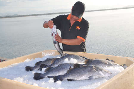 NHA TRANG, VIETNAM - JUNE 23, 2013: Barramundi fish are farmed in the Van Phong Bay and exported to the world market