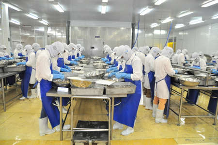 TRA VINH, VIETNAM - NOVEMBER 19, 2012: Workers are peeling and processing fresh raw shrimps in a seafood factory in the Mekong delta of Vietnam