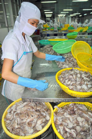 VUNG TAU, VIETNAM - SEPTEMBER 28, 2011: A woman worker is classifying octopus for exporting in a seafood processing factory Éditoriale