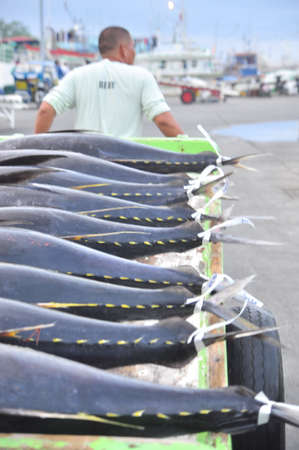 thunnus: General Santos, Philippines - September 5, 2015: Porters are loading tuna onto truck to the seafood factory in General Santos city