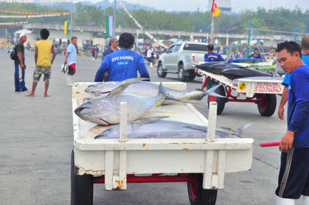 thunnus: General Santos, Philippines - September 5, 2015: Fisherman are landing tuna from fishing boat at the seaport
