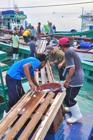 thunnus: General Santos, Philippines - September 5, 2015: Workers are loading fish at a dock
