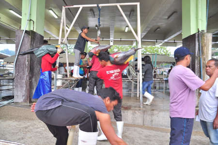thunnus: General Santos, Philippines - September 5, 2015: Fishermen are weighing tuna to sell to the market