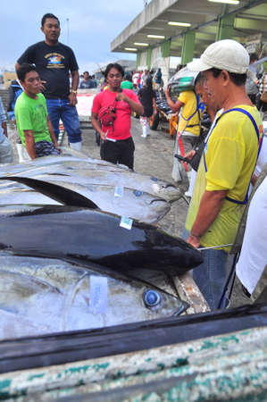 thunnus: General Santos, Philippines - September 5, 2015: Buyers are checking the quality of tuna at the seaport
