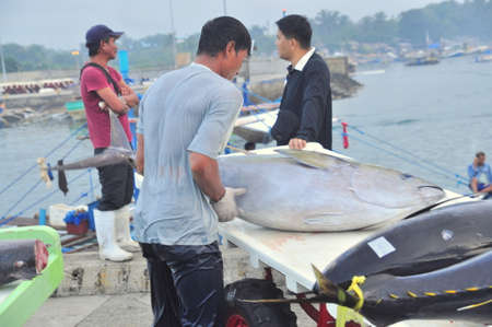 landed: General Santos, Philippines - September 5, 2015: Tuna are being landed onto truck at the seaport