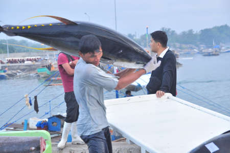 General Santos, Philippines - September 5, 2015: Tuna are being landed onto truck at the seaport