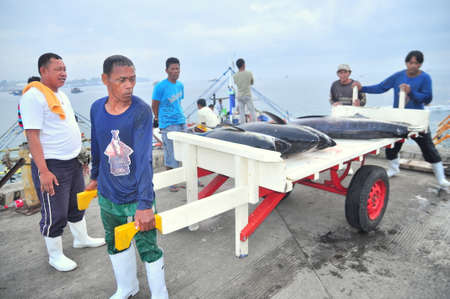 thunnus: General Santos, Philippines - September 5, 2015: Workers are loading tuna onto truck to the seafood factory in General Santos city Editorial