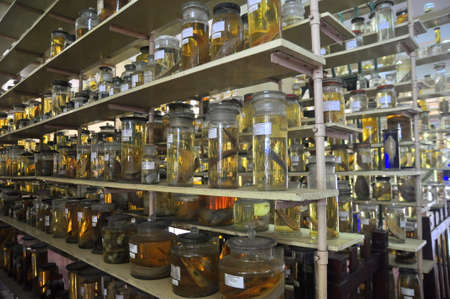 mummified: Nha Trang, Vietnam - February 9, 2016: Mummified specimen of all kinds of fish and sea life in liquid are stored and showed to tourists at the Vietnam Institution of Ocean in Nha Trang city Editorial