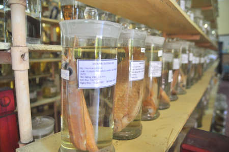 corpses: Nha Trang, Vietnam - February 9, 2016: Mummified specimen of all kinds of fish and sea life in liquid are stored and showed to tourists at the Vietnam Institution of Ocean in Nha Trang city Editorial