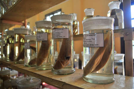 Nha Trang, Vietnam - February 9, 2016: Mummified specimen of all kinds of fish and sea life in liquid are stored and showed to tourists at the Vietnam Institution of Ocean in Nha Trang city Редакционное
