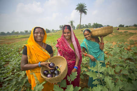 an agricultural district: Banka, India - September 28, 2015: Women are standing in their eggplant field  under Agricultural Programs in Banka District, India Editorial