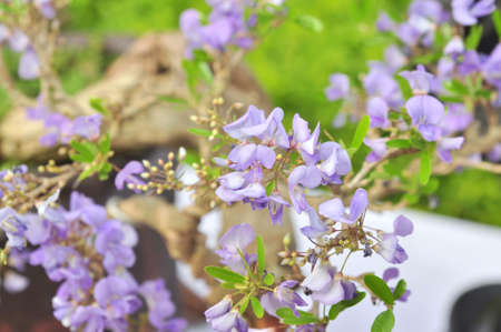 Purple blossom in the park