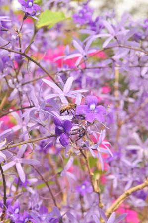 knobby: Purple Queen Flower