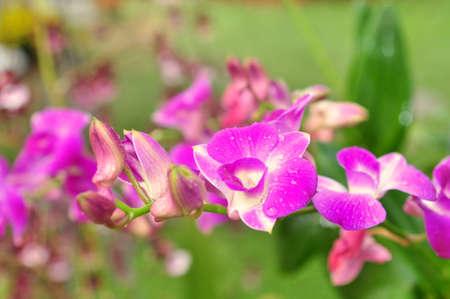 Violet orchid flower in a park