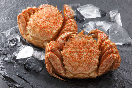 Fresh hairy sea crab on black rocky platter with cold ice