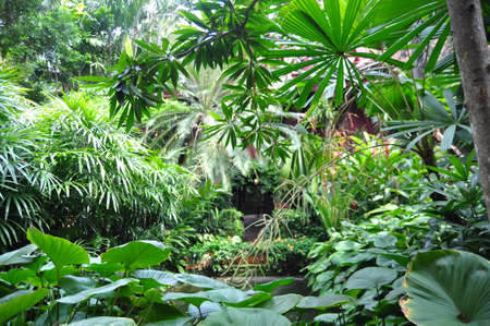 Green tropical garden in asia 스톡 콘텐츠
