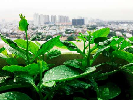 Vegetables mini garden farm on rooftop in urban city Stock Photo