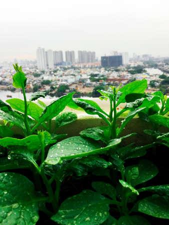 Légumes mini-ferme de jardin sur le toit dans la ville urbaine Banque d'images