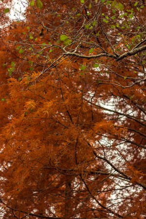 Reddish brown leaves in the autumn Reklamní fotografie