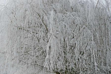 Beautiful winter landscape snow on the trees Фото со стока