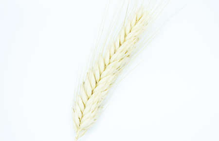 Rye spike located on a white background