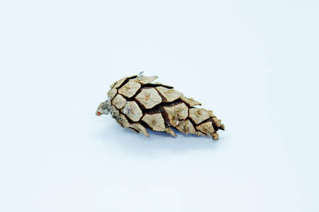Spruce cone is located on a white background Foto de archivo - 130807056