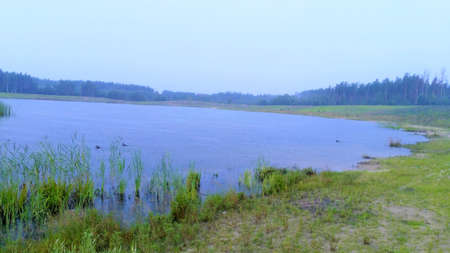 Forest lake forest, nature, landscape fishing Imagens