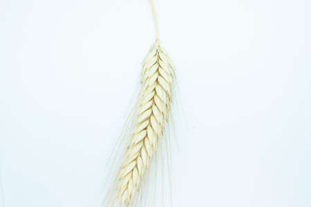 Ripe ear of rye perched on a white background 免版税图像