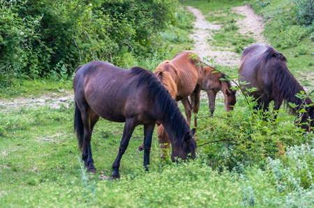 steed: Four horses grazing in the mountains, Crimea, Ukraine