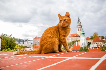 krumlov: Red cat on the roof of Cesky Krumlov, Czech Republic