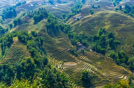Amazing view on rice terrace in Sapa village, Vietnam