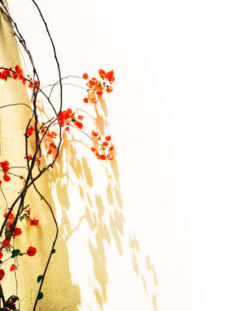 Summer flower leaving shadows on the white wall.