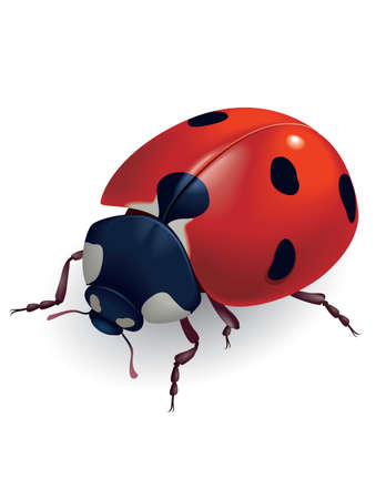 Mariquita. (Latín Coccinellidae) Ilustración vectorial.