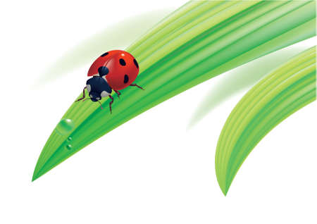 illustration. Ladybird on grass with water drops. Vector