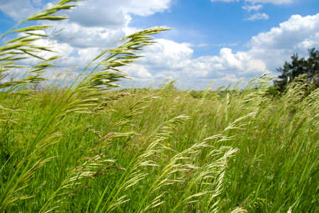Green summer field covered by a grass and the beautiful blue sky Stock Photo - 8251090